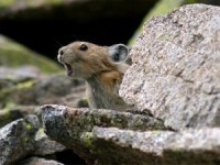 the-mouse-that-roared1-300x225
